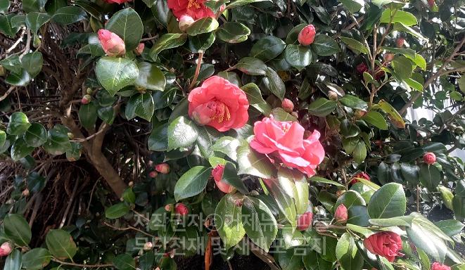 인도의 시인 타고르는 '사랑은 이해의 다른 이름' 이라고 했습니다.