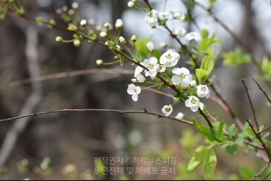 김춘수1922-2004 시인의 꽃